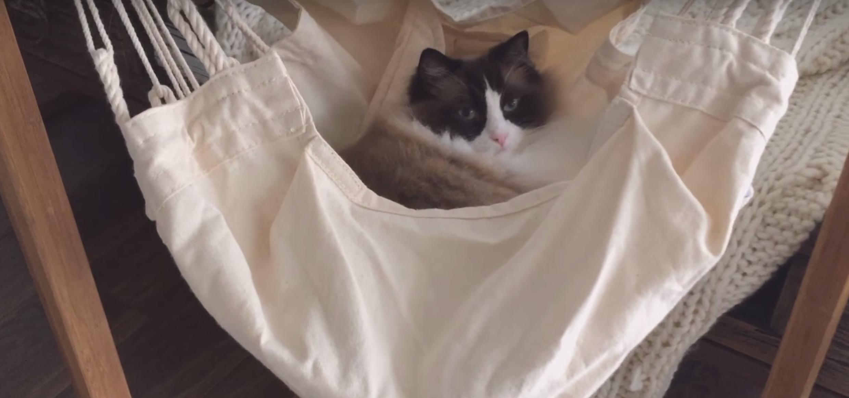 Katze nutzen die Federwiege so gerne wie menschen